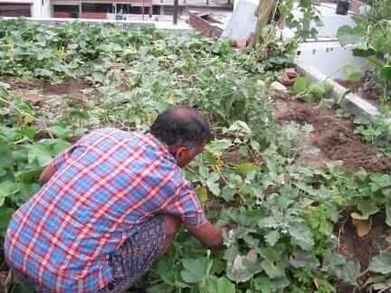 mahendr-sachan-farming